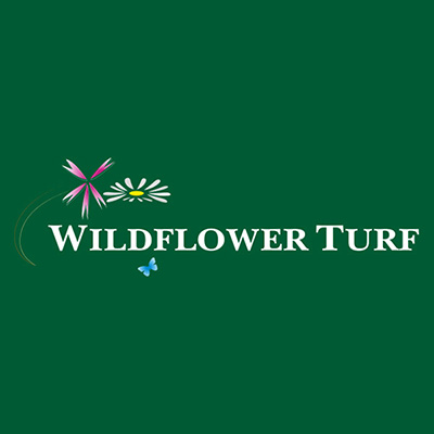 Wildflower Turf